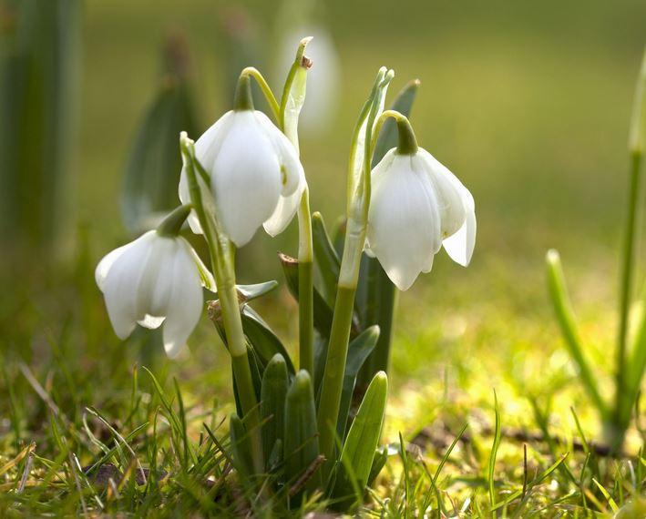 Powitanie wiosny w Zaborku