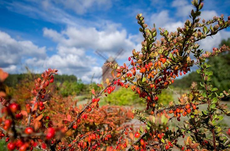 Jesienny weekend w Zaborku z wycieczką przyrodniczą